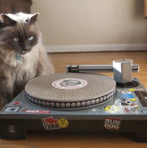 A legújabb trend – Macskák a lemezjátszónál