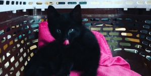 Találd ki mi legyen a cica neve és akár örökös vendéglistás lehetsz a Fabric-ben!
